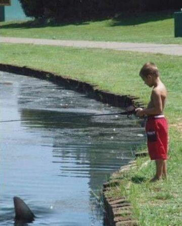 rekin w rzece