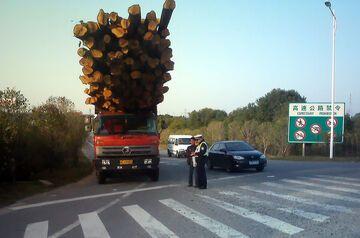 Promocja na drewno w lesie