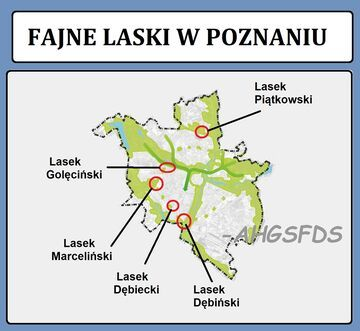 Fajne laski w Poznaniu