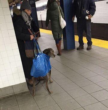 Siatka na psa