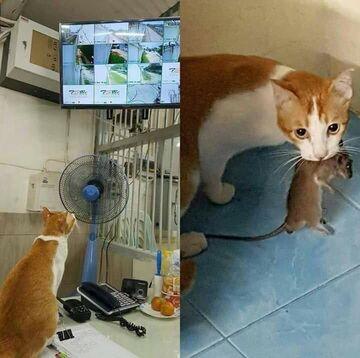 Tak dzisiaj polują koty