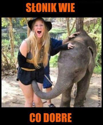 Słonik wie co dobre