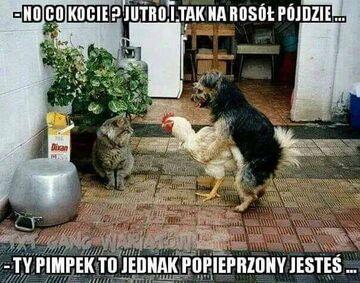 Kot, pies i kura