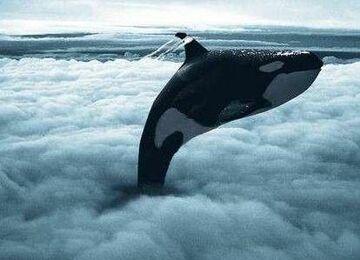 Orka w chmurach
