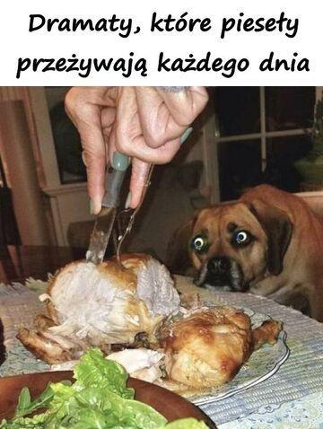 Dramat psa