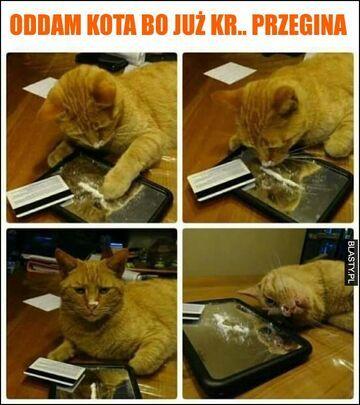 Oddam kota....