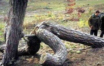 drzewo robię drzewo
