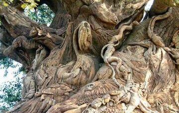 niesamowite drzewo