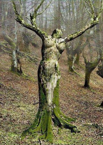 Matka natura