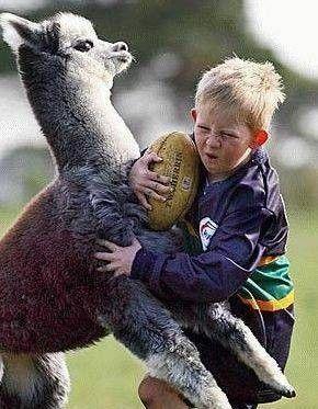lama & dzieciak - rugby