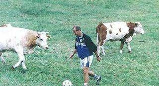 piłka nożna, bydło