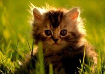 kotek w trawie