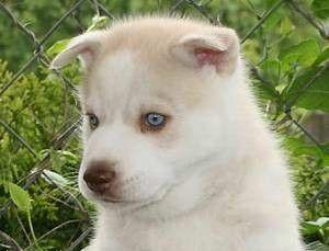 niebiesko oki