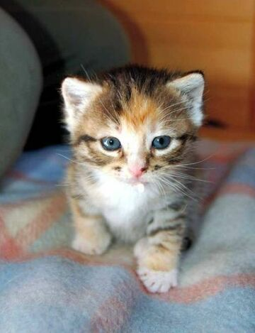 ładny kotek