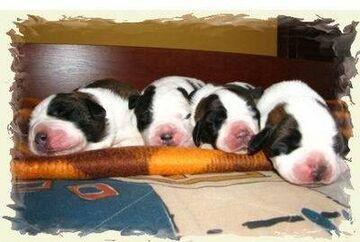 ciapki śpią