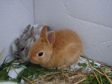 Dwa króliczki w rogu