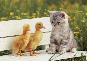 Kaczuszki & kot