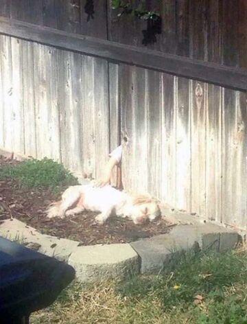 Kiedy nie masz psa, ale sąsiedzi mają