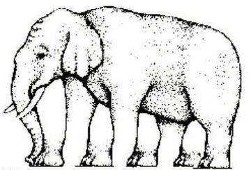Ile widzisz nóg u słonia?