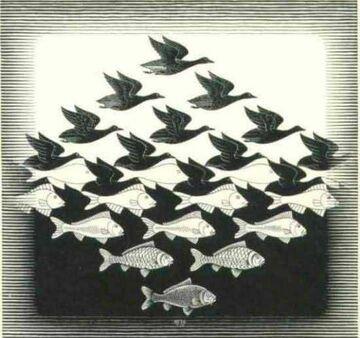 kaczki & ryby
