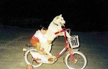 pies wozi dzieciaka ona rowerze