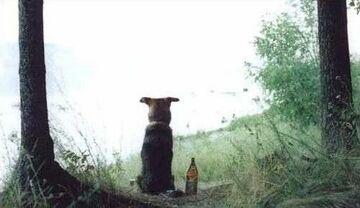 pies na browarku