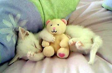 Mały kociak ze swoją maskotką