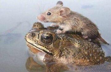 myszka & żabka
