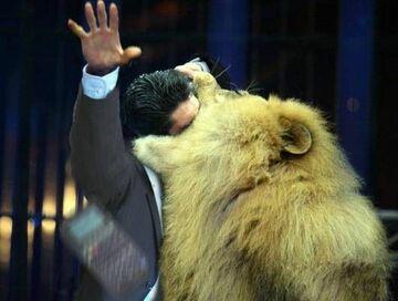 lew go dziabnął