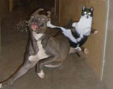 karate?