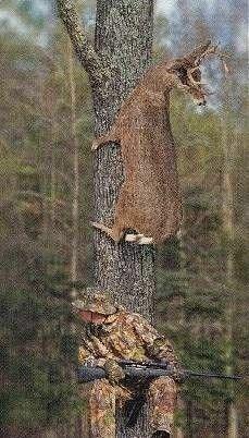 jeleń na drzewie