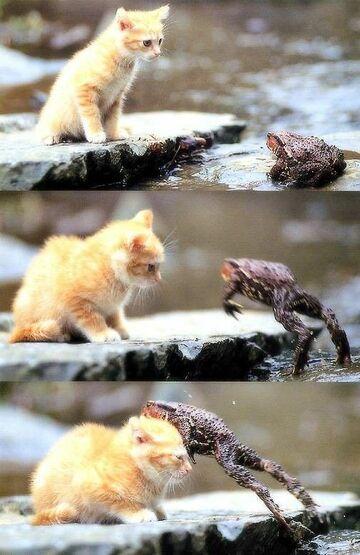 kotek & żaka