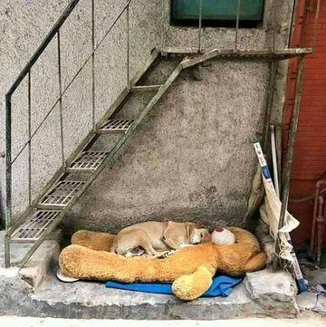 Pies ze swoim misiem