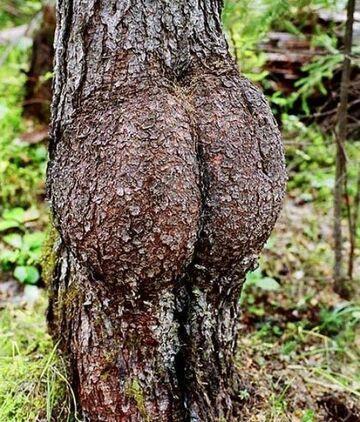Drzewo też ma swoje 4 litery