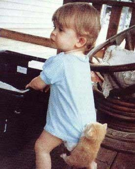 Kociak - pasażer na gapę