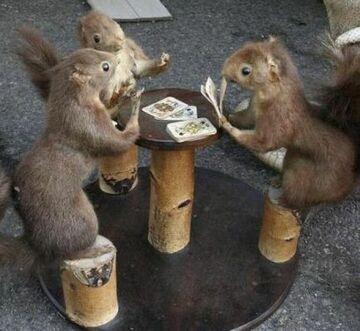 wiewiórki grają w pokera
