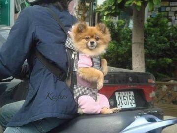 pies na plecach