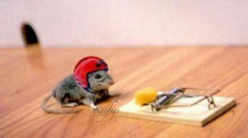 myszka w kasku