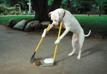 pies sprząta po sobie