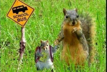 wiewiórka idzie do szkoły