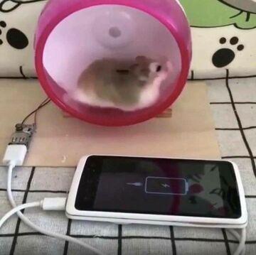 Chomik ładuje telefon