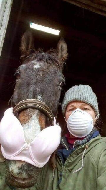 Koń w miseczkach