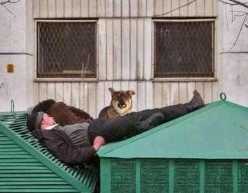 Śpioch na dachu.