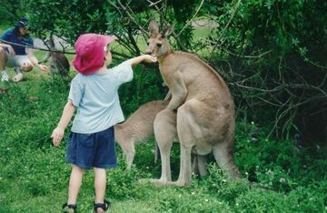 kangury i dzieciak