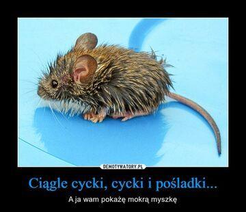 Mokra myszka