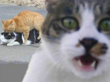 kotki się kochają