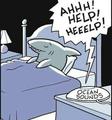Relaksujące ASMR dla rekinów.