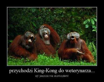Przychodzi King-Kong do weterynarza
