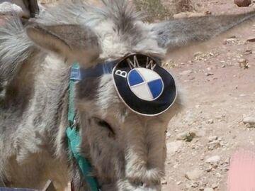 Osioł BMW