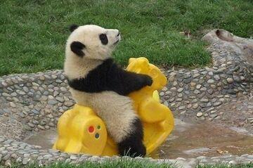 Panda na placu zabaw
